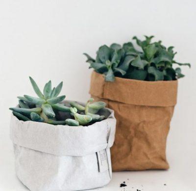 Intégrer de la verdure à sa déco : 9 astuces quand on n'a pas la main verte