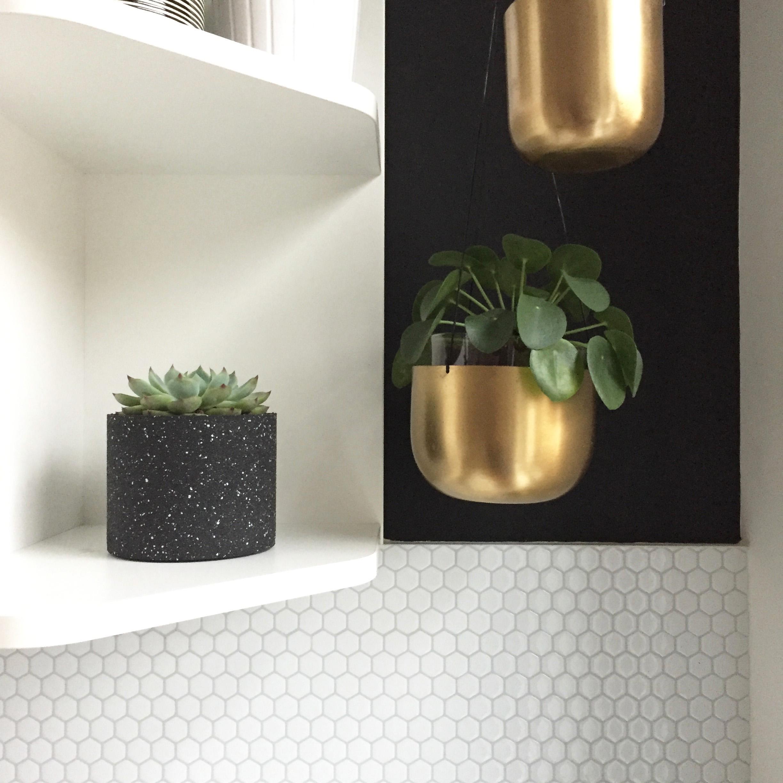 plantes d'intérieur : mon expérience, conseils pour avoir la main