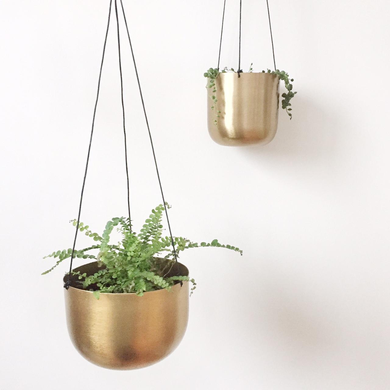Suspension Pour Plantes D Intérieur plantes d'intérieur : mon expérience, conseils pour avoir la