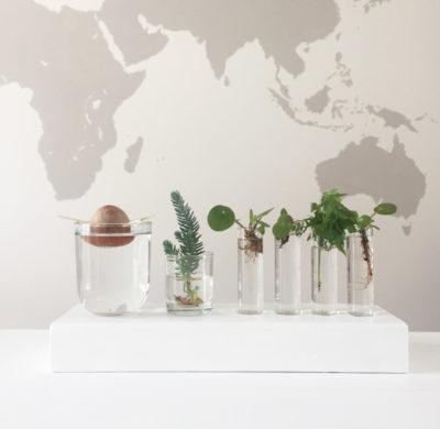 DIY #66 – Un stand pour boutures de plantes